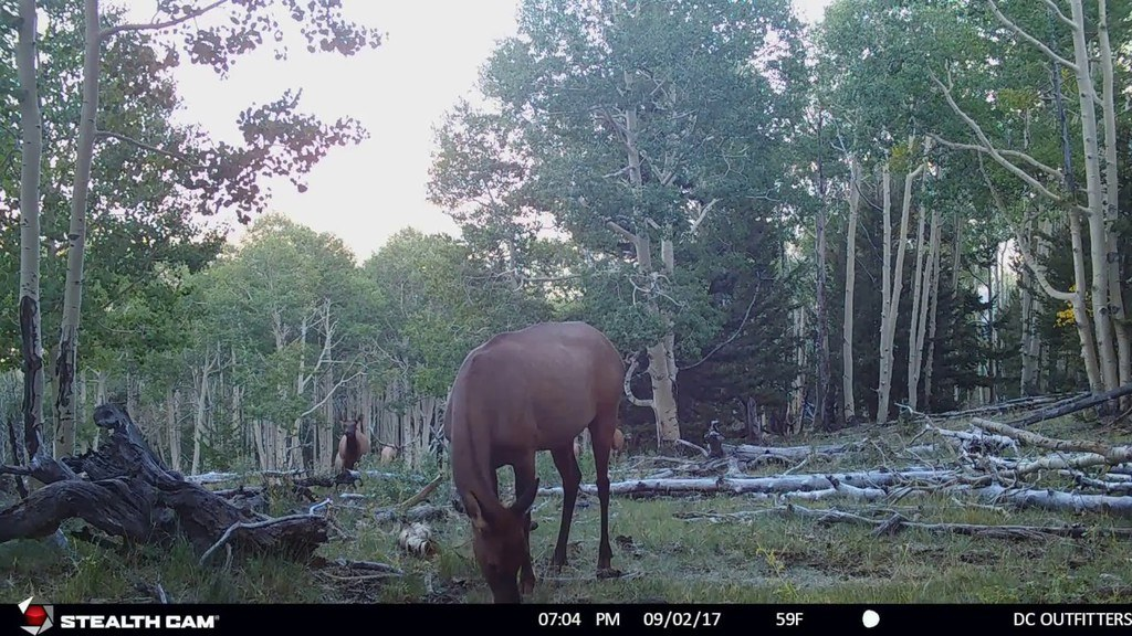 Best Trail Camera STC-DS4K Camera in action